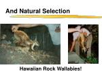 and natural selection