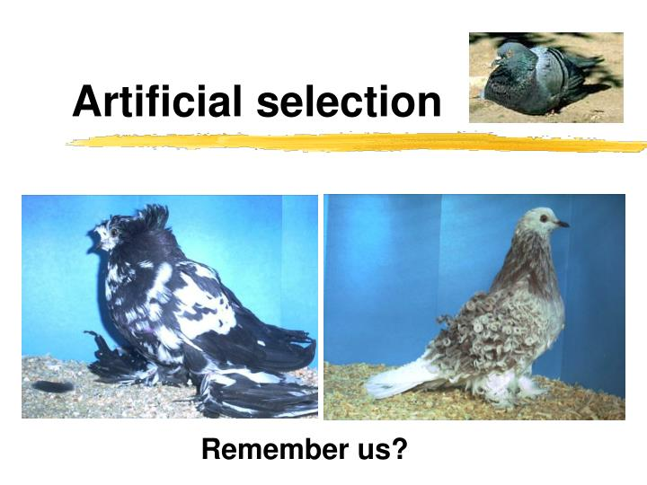 Artificial selection
