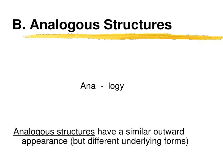 B. Analogous Structures