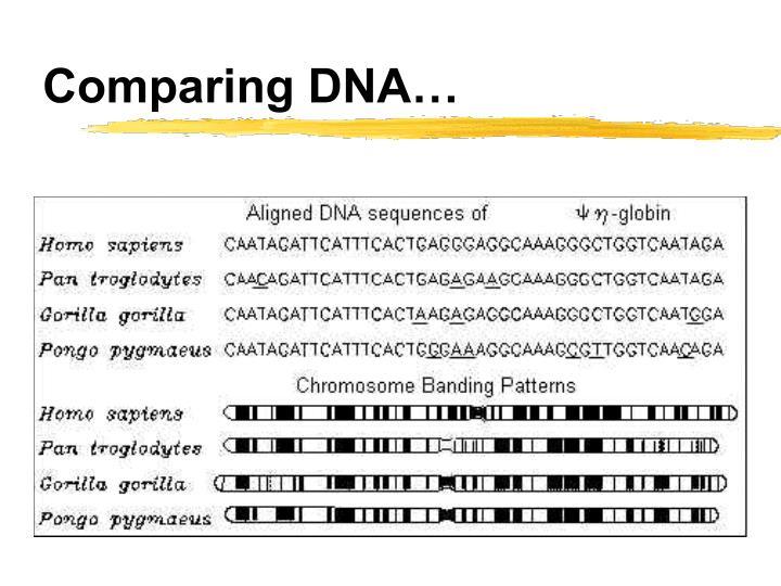 Comparing DNA…