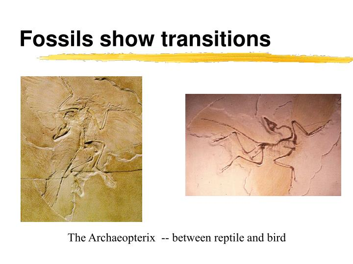 Fossils show transitions
