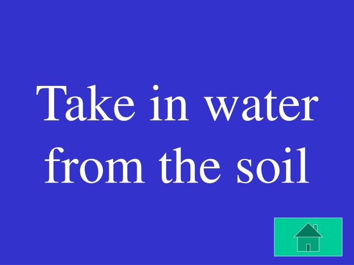 Take in water from the soil