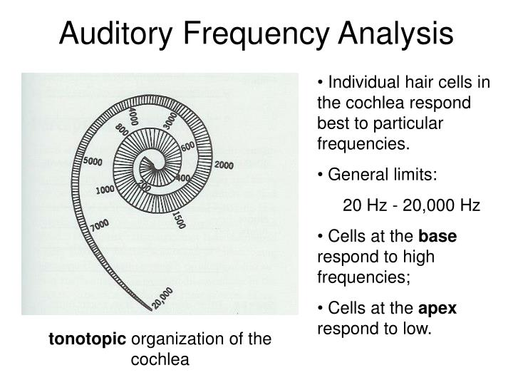 Auditory Frequency Analysis