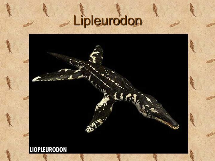 Lipleurodon