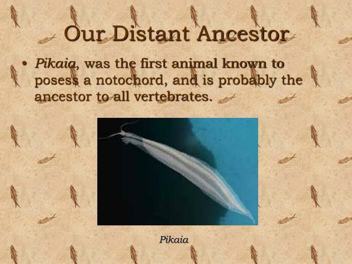 Our Distant Ancestor