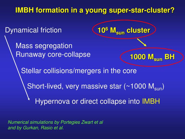 IMBH formation in a young super-star-cluster?