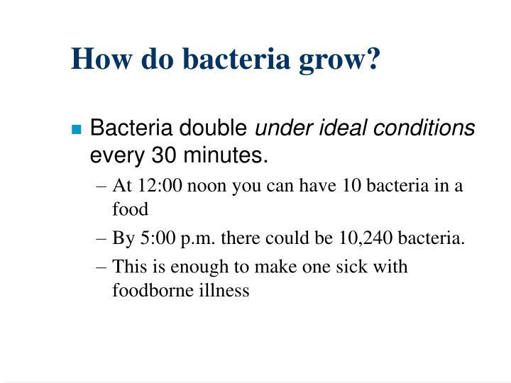 How do bacteria grow?