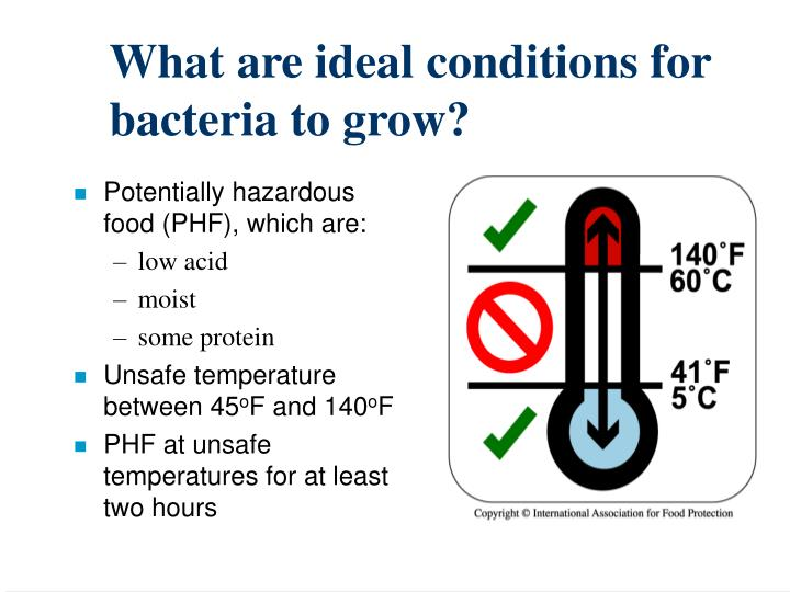 What are ideal conditions for bacteria to grow?