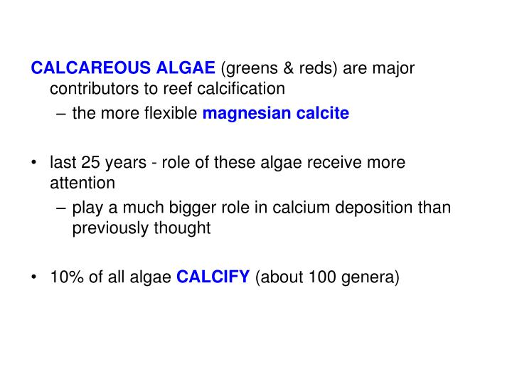 CALCAREOUS ALGAE