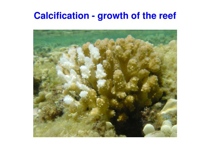 Calcification - growth of the reef