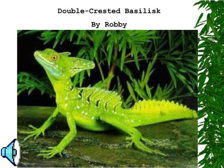 Double-Crested Basilisk