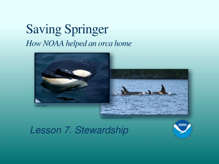 Saving springer how noaa helped an orca home