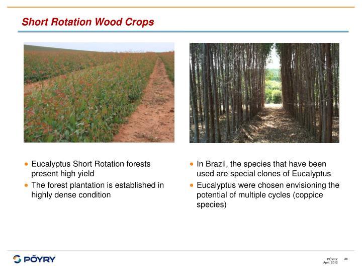 Short Rotation Wood Crops