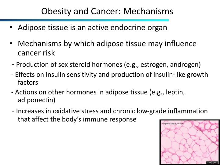 Obesity and Cancer: Mechanisms