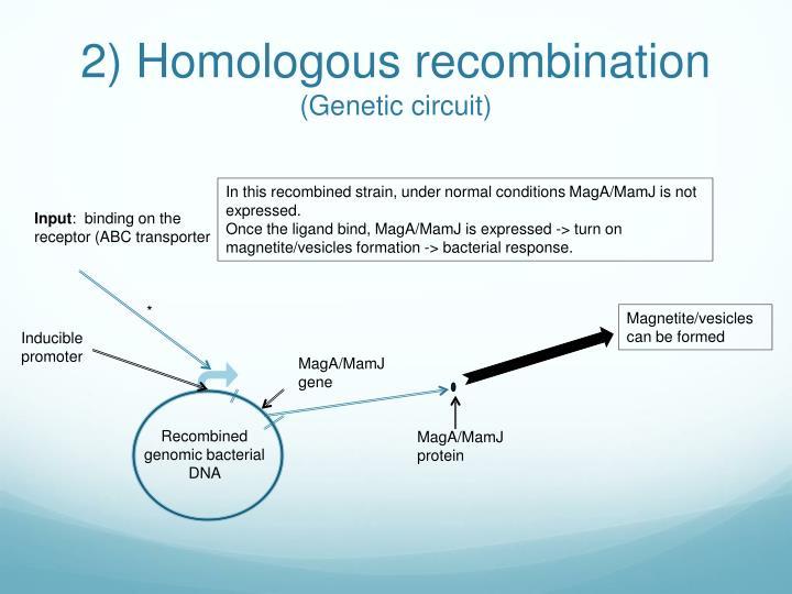 2) Homologous recombination