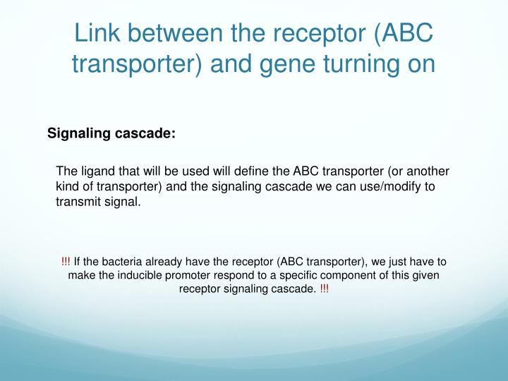 Link between the receptor (ABC transporter) and gene turning on