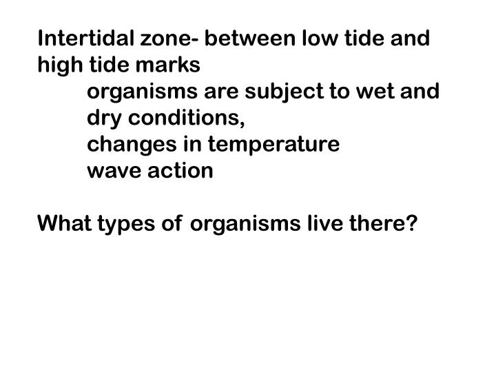 Intertidal zone- between low tide and
