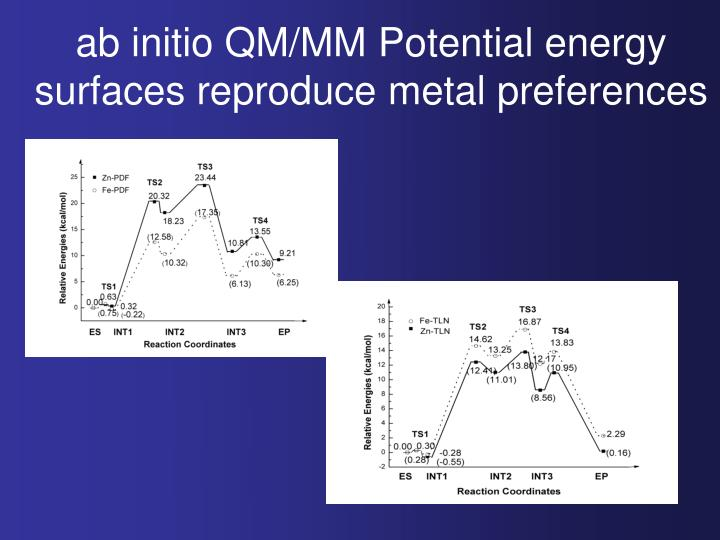 ab initio QM/MM Potential energy surfaces reproduce metal preferences