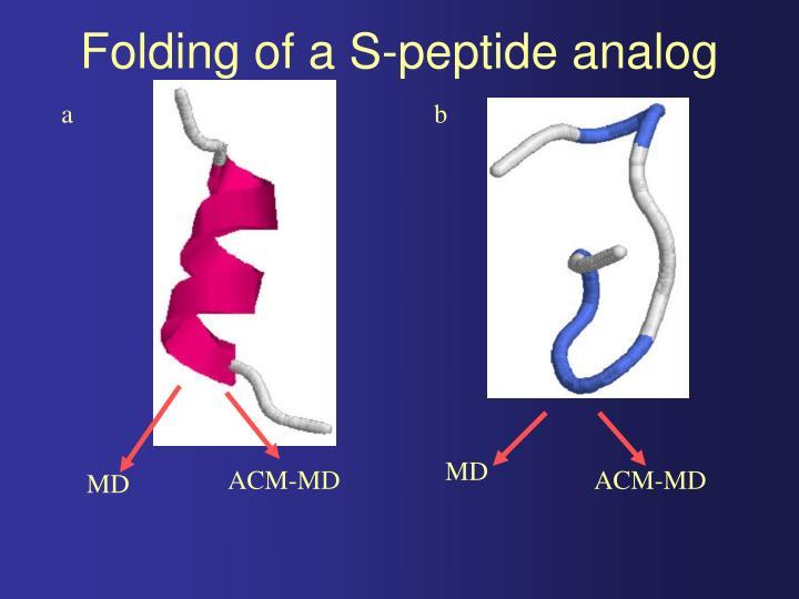 Folding of a S-peptide analog