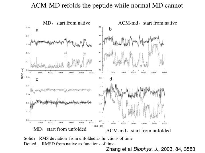 ACM-MD refolds the peptide while normal MD cannot