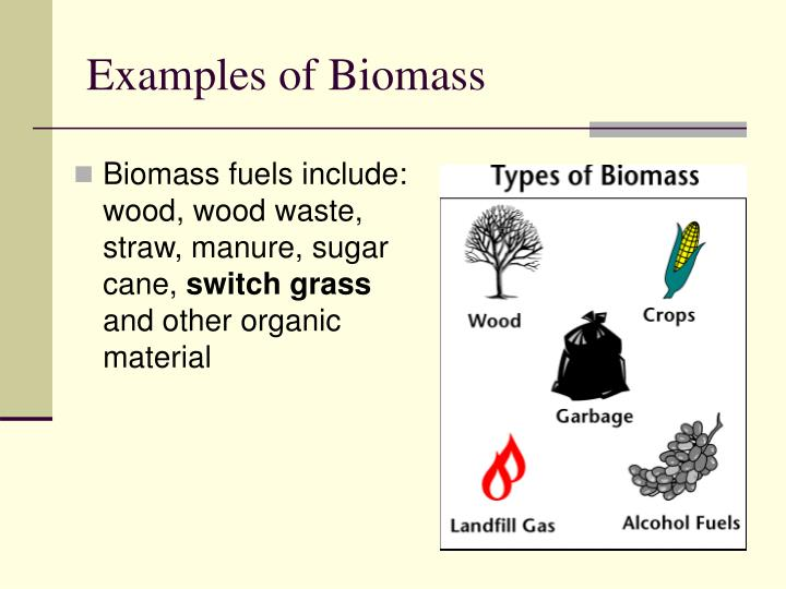 Examples of Biomass