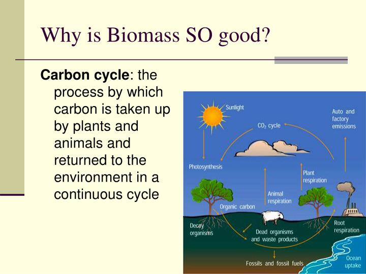 Why is Biomass SO good?