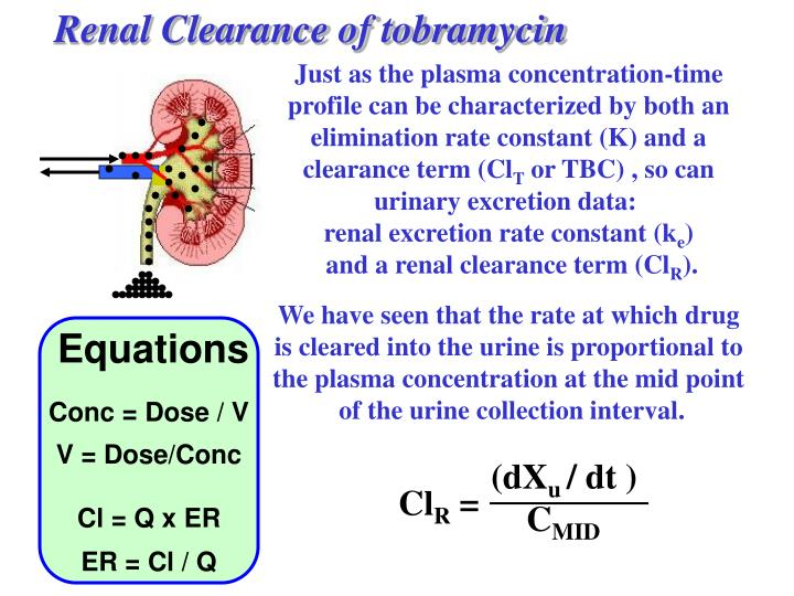 Renal Clearance of tobramycin