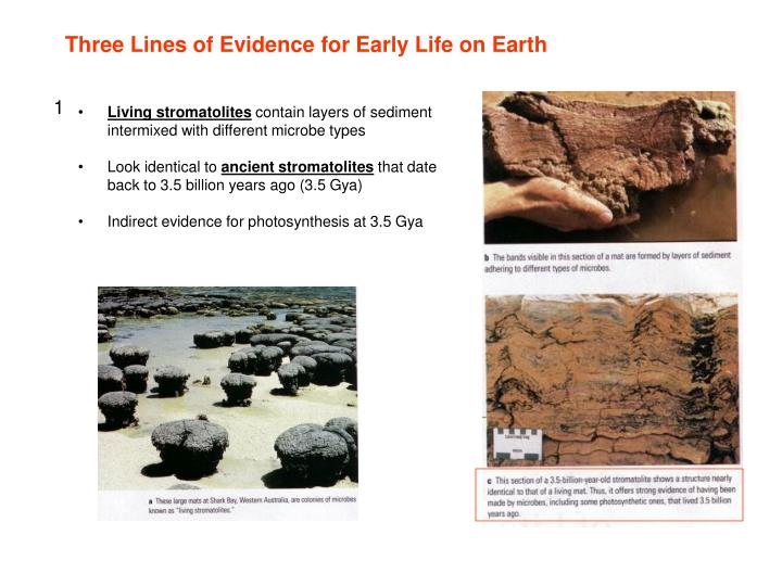 Three Lines of Evidence for Early Life on Earth