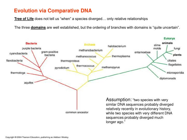 Evolution via Comparative DNA