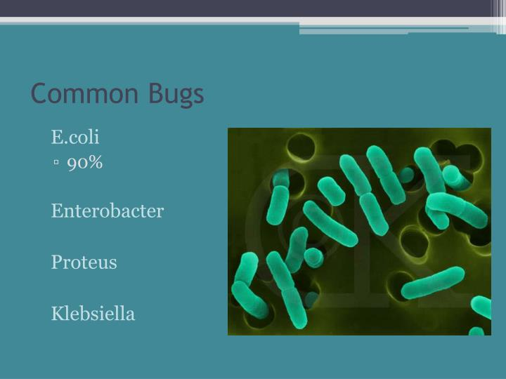 Common Bugs