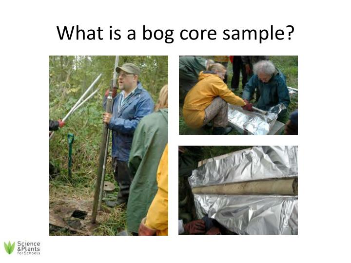 What is a bog core sample