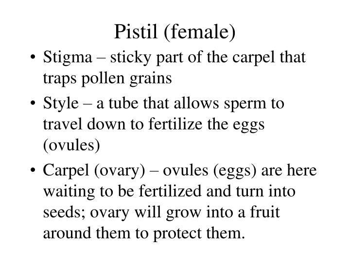 Pistil (female)