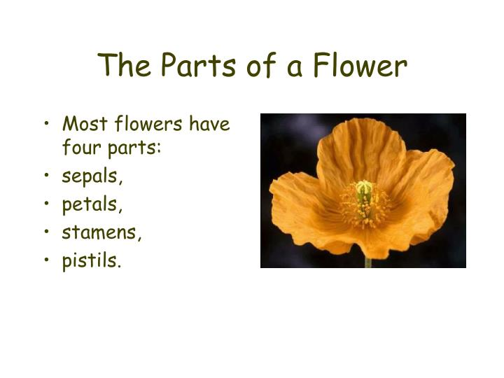 The parts of a flower