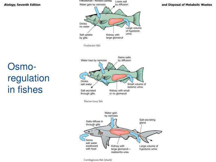 Osmo-regulation