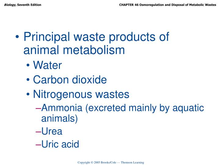 Principal waste products of animal metabolism