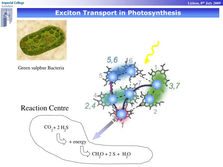 Exciton Transport in Photosynthesis