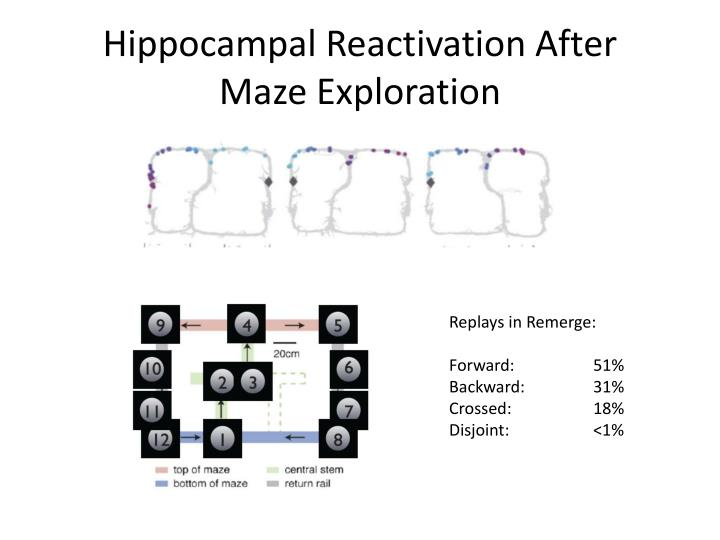 Hippocampal