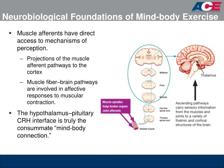 Neurobiological foundations of mind body exercise