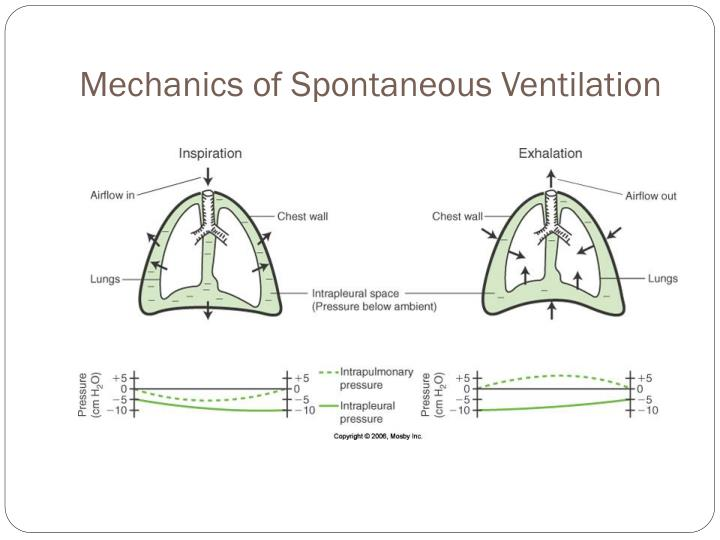 Mechanics of Spontaneous Ventilation