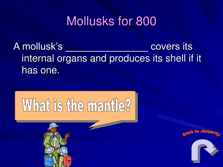 What is the mantle?