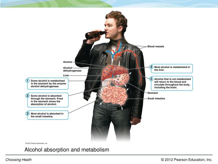 Alcohol absorption and metabolism