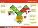 the y lifecycle1