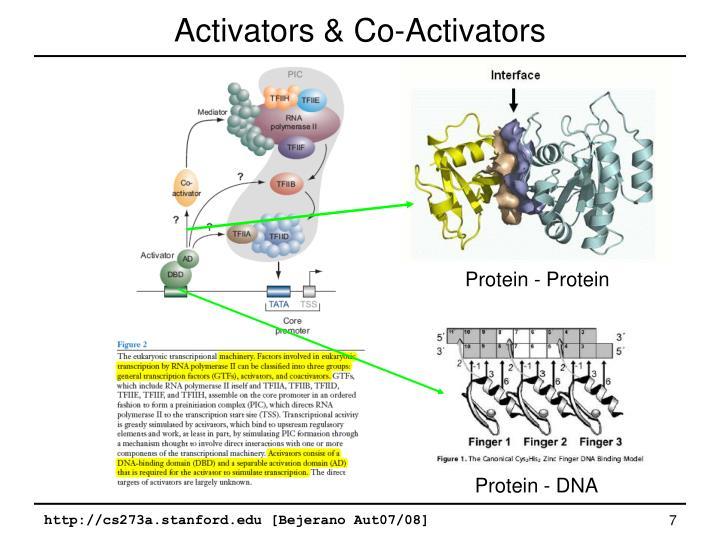 Activators & Co-Activators