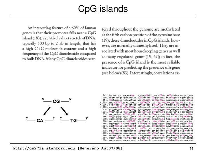 CpG islands