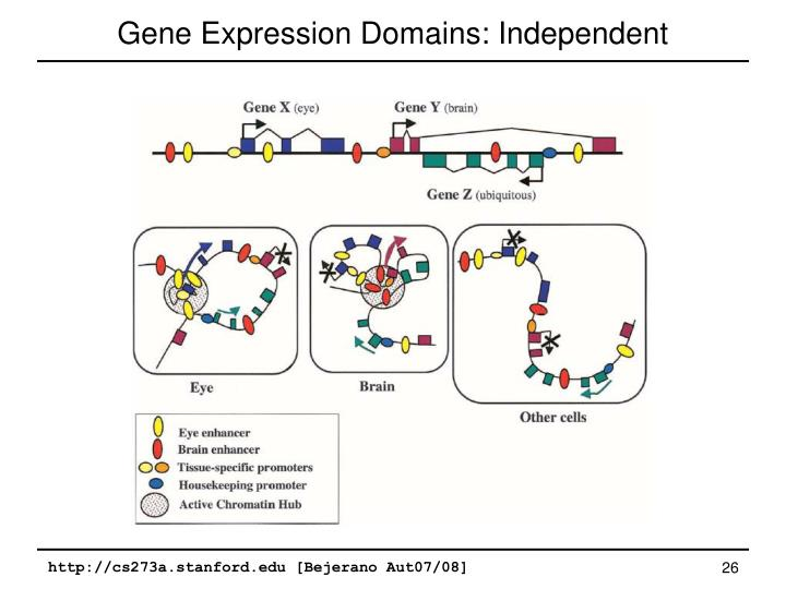 Gene Expression Domains: Independent