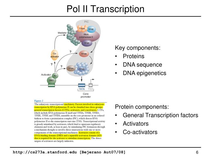 Pol II Transcription