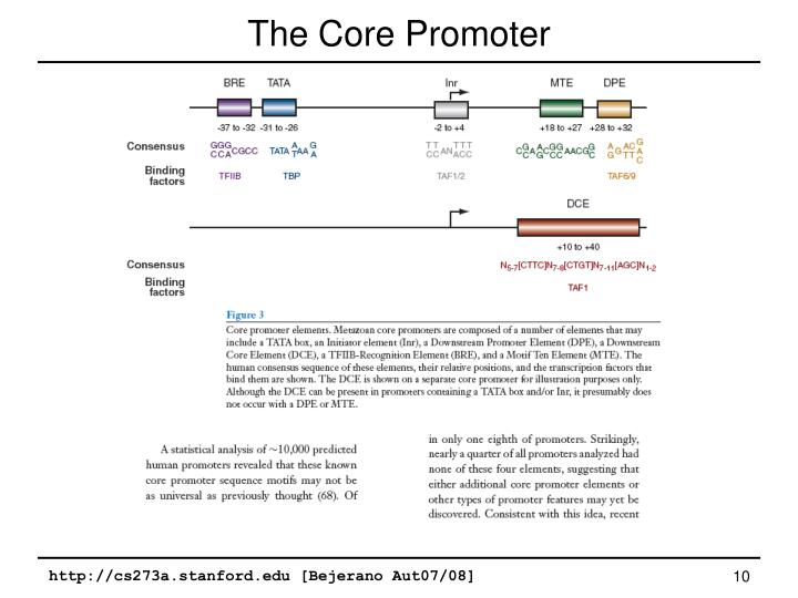 The Core Promoter
