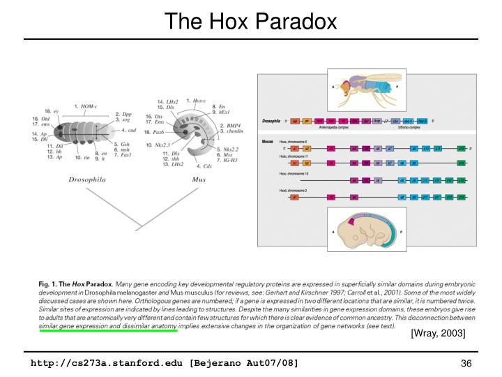 The Hox Paradox
