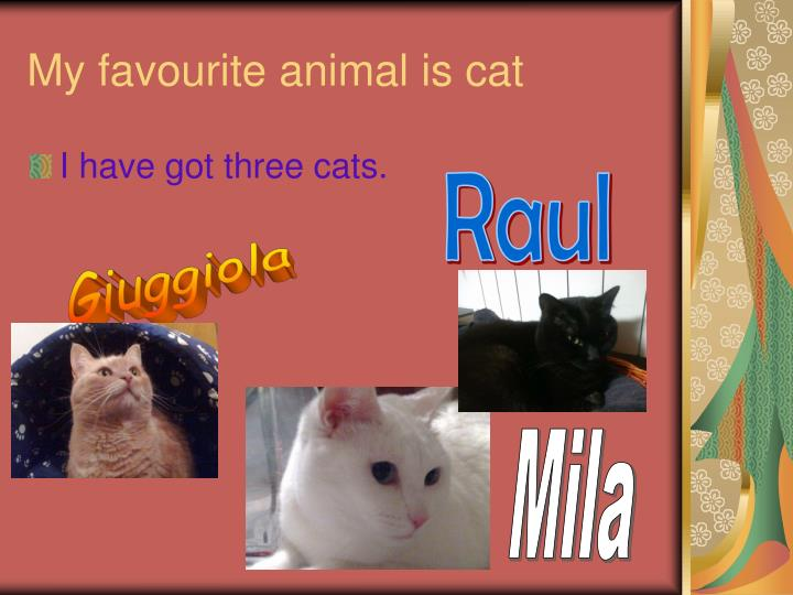 My favourite animal is cat