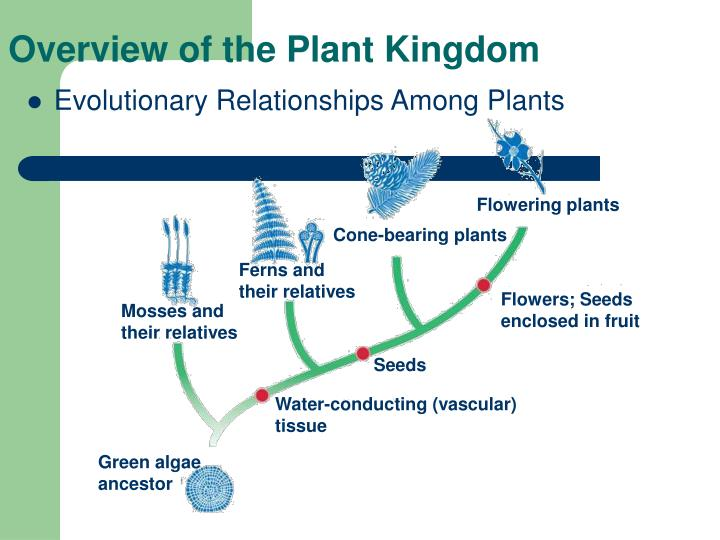 an introduction to plants Gergerich, rc, and v v dolja 2006 introduction to plant viruses, the invisible  foe the plant health instructor doi: 101094/phi-i-2006-0414-01 rose c.